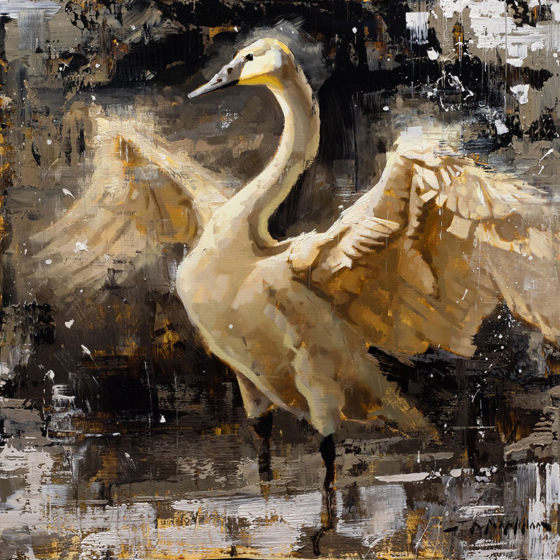 Spreading Her Wings - swan painting by artist Jerry Markham